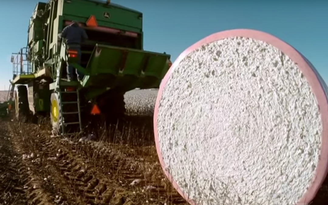 Friday Feature:  The Tractor Engineer Who Revolutionized Cotton Farming