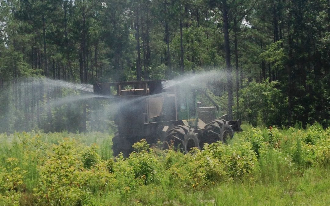 Ready to Reforest? Consider Chemical Site Prep