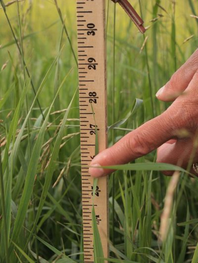 """Using a """"Pasture Stick"""" for Grazing Management Decisions"""