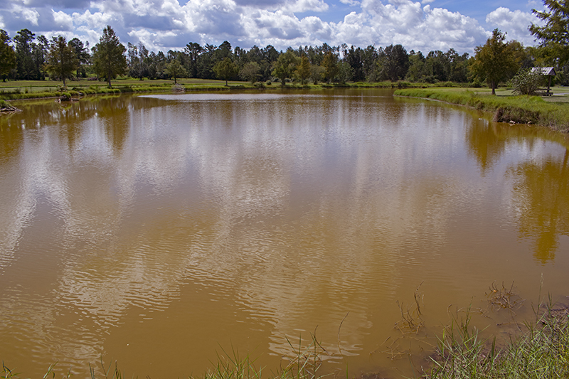 Managing Muddy Ponds