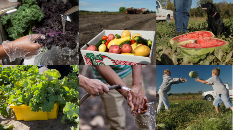 Beyond Basic Produce Food Safety: A Hands-On Analysis – April 8