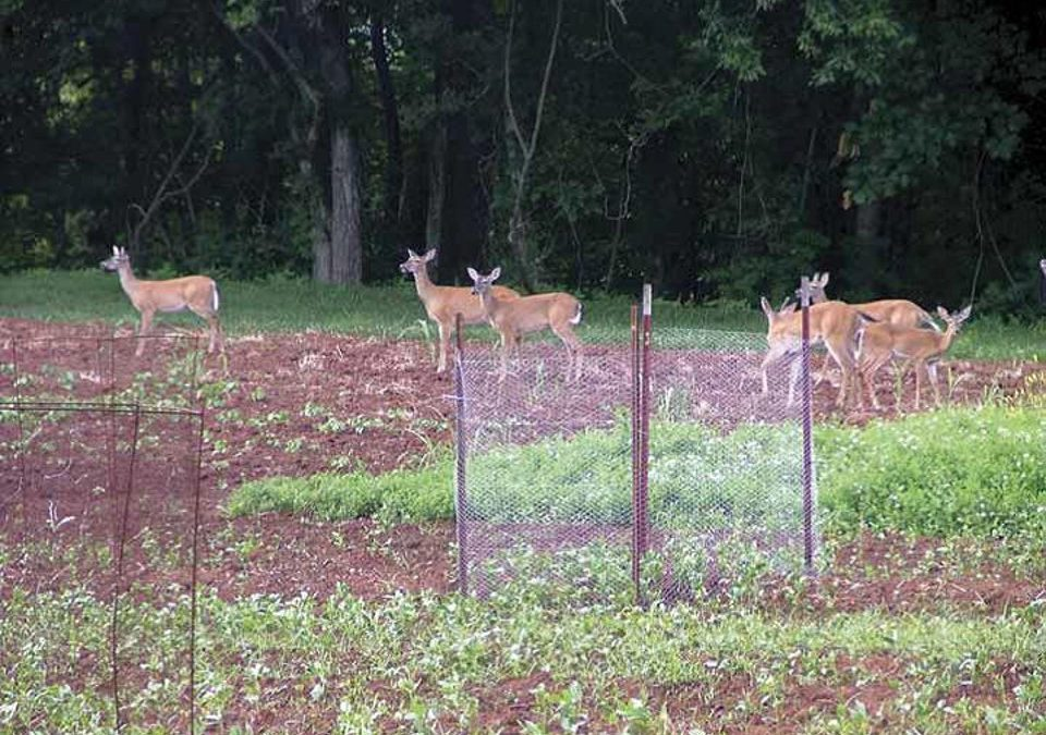 Are You Happy with Your Wildlife Food Plot's Performance?
