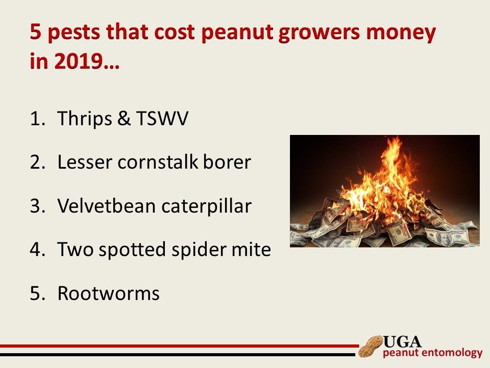 Insect Management Slide