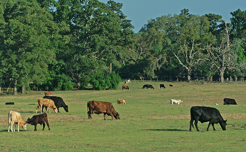 Effective Management of  Warm-Season Pastures During the Spring Transition