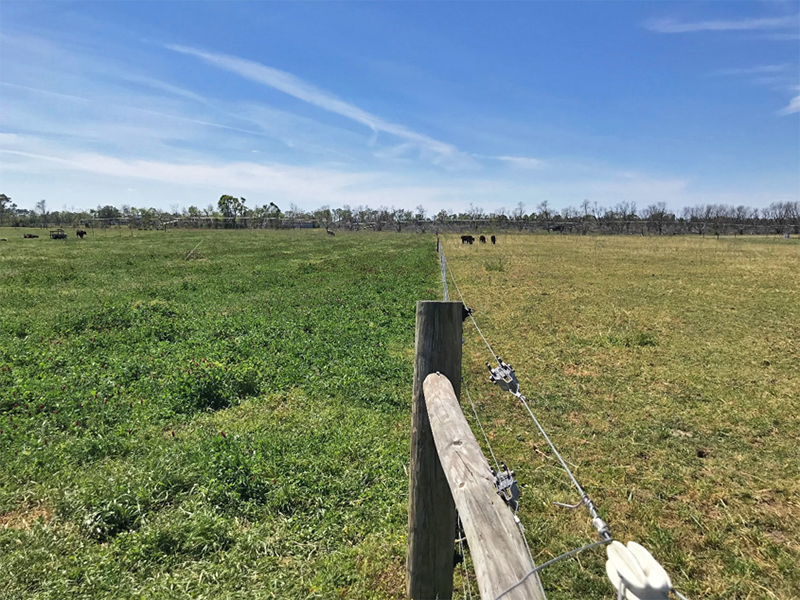 The Art and Science of Grazing Management