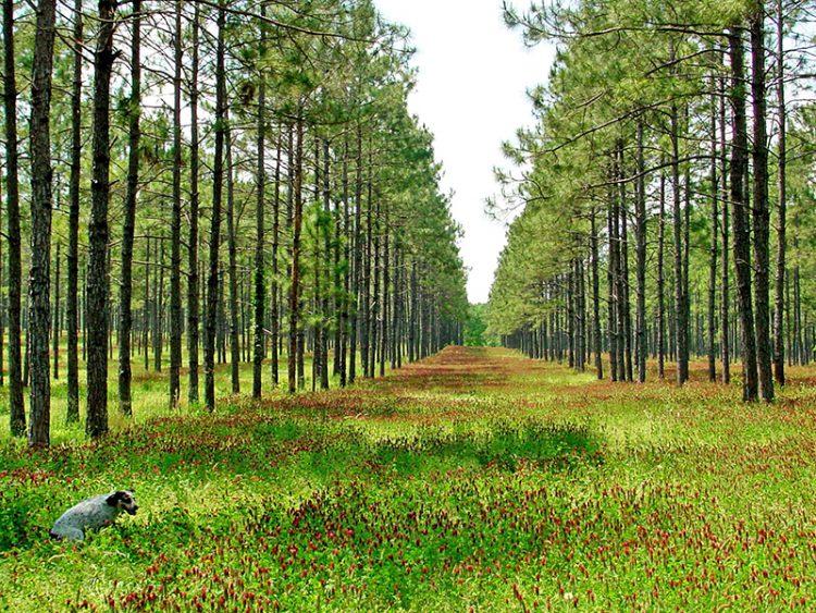 Agroforestry:  Working Toward Diverse Intercropping
