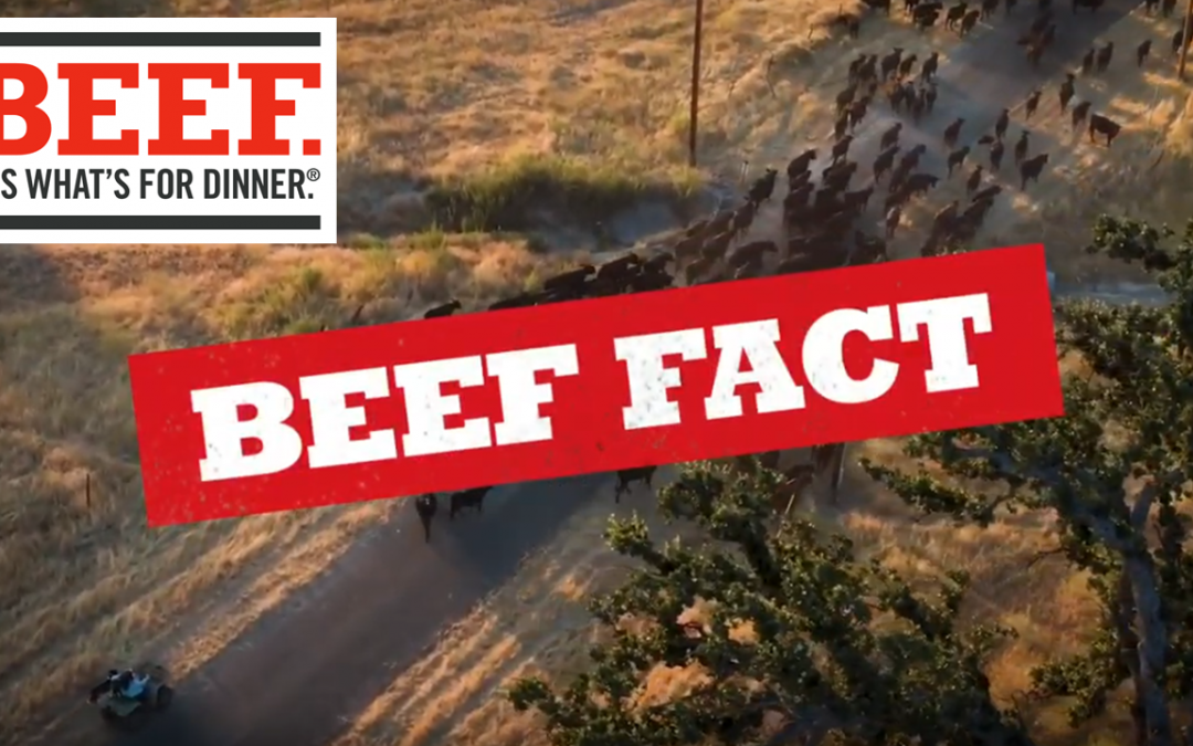 Friday Double Feature:  Real Facts About Beef