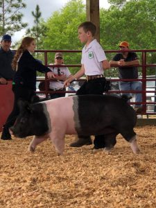 youth showing pig