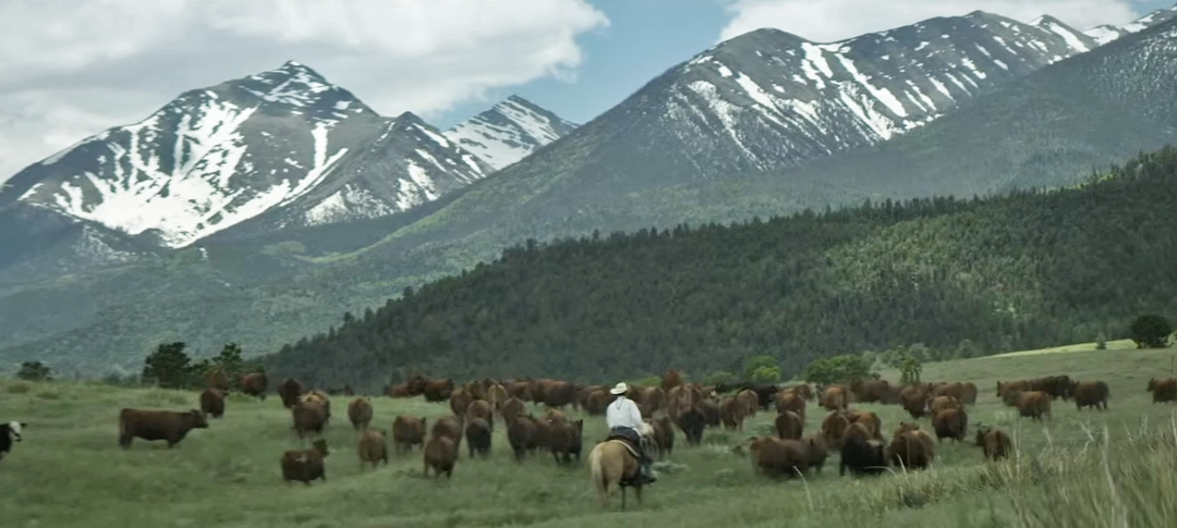 Friday Feature:  Cattle First Trailer & Documentary