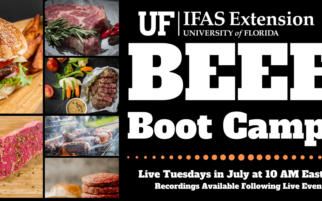 Freezer Beef Boot Camp – Tuesdays in July