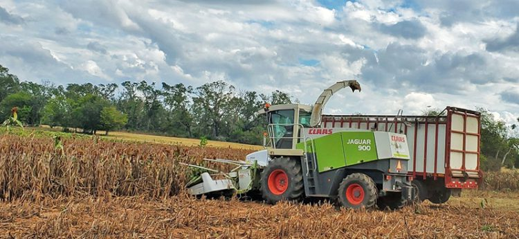 Properly Preserving Summer Silage Crops