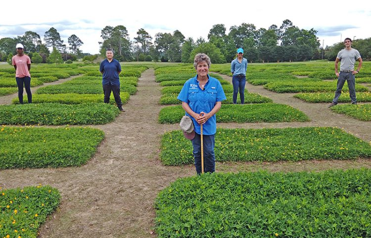 2020 Virtual Perennial Peanut Field Day