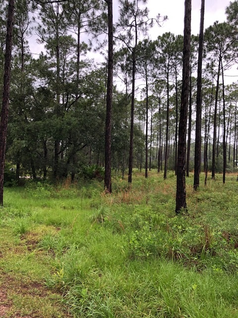 Planning a Pine Plantation for Wildlife and More