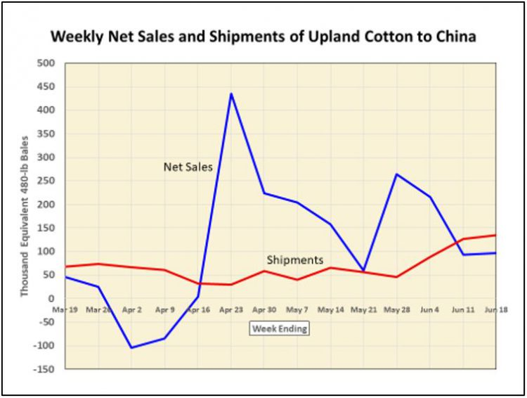 Weekly Net Cotton Sales to China 6-25-20