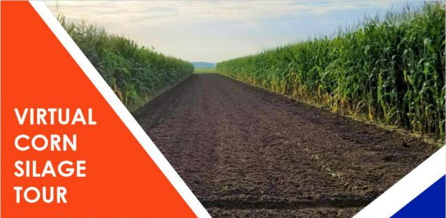 Virtual Corn Silage Variety Trial Tour – June 11