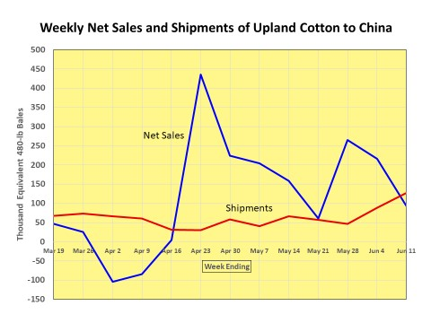Cotton Market Commentary:  Mid-June Summary