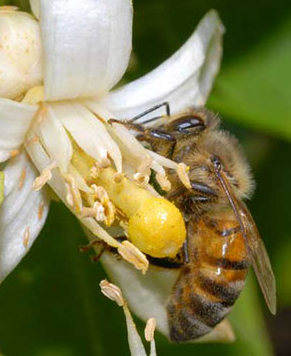 The Business of Pollination
