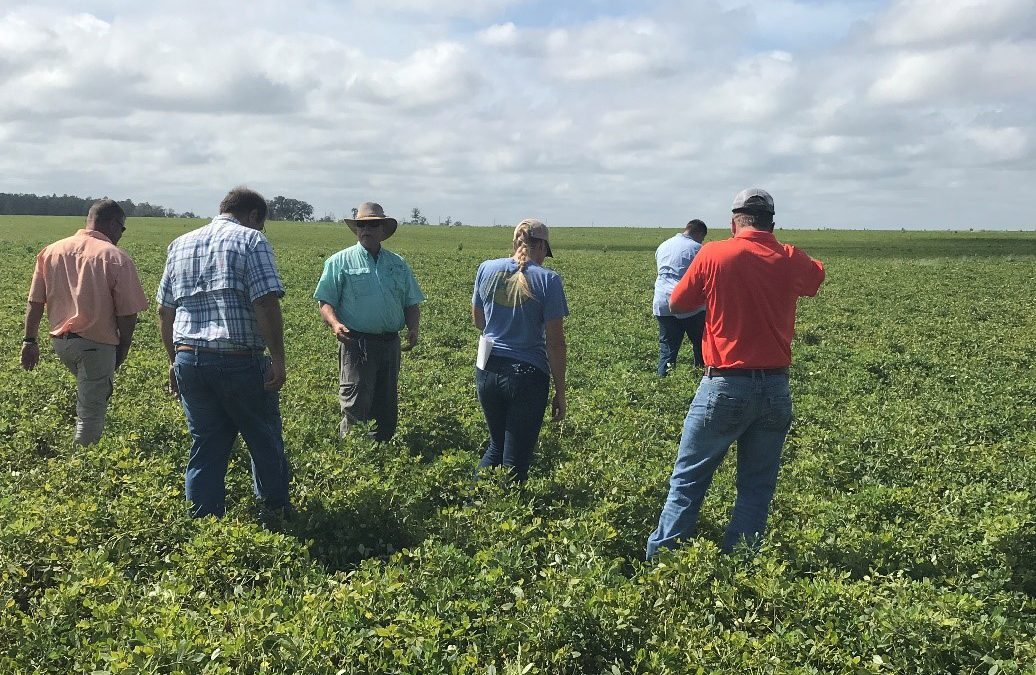 The UF/IFAS Peanut Survey Now Statewide