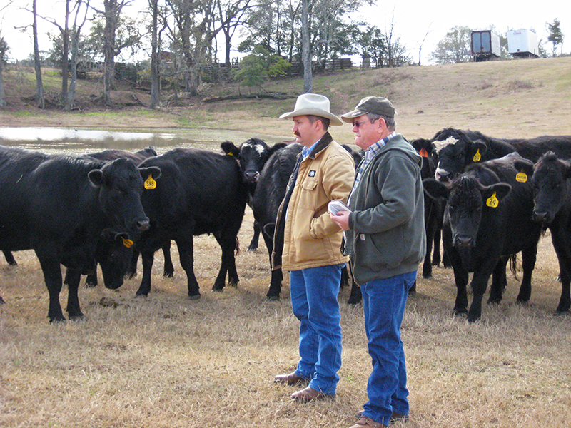 Friday Feature:  County Extension Agents Help Farmers & Ranchers Make More Informed Management Decisions