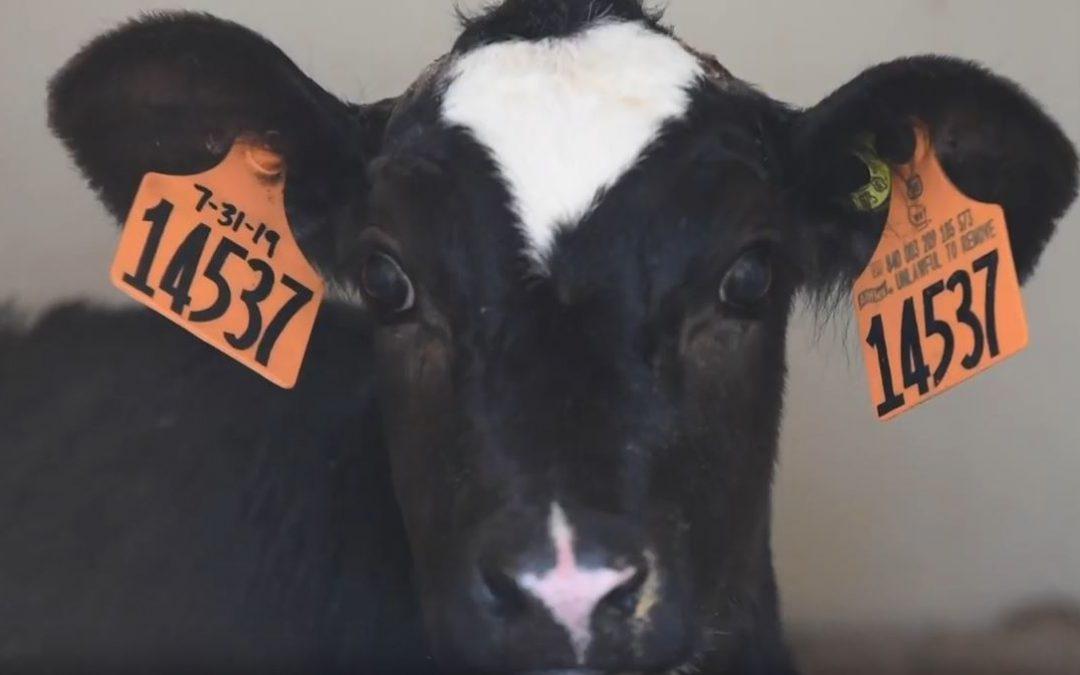Friday Feature:  Wisconsin Livestock Traceability Program
