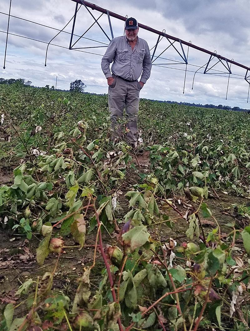 Sam Walker surveyed the damage to his cotton field