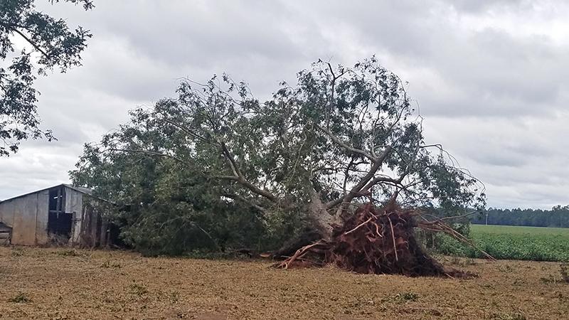 tree blown over on barn on field edge