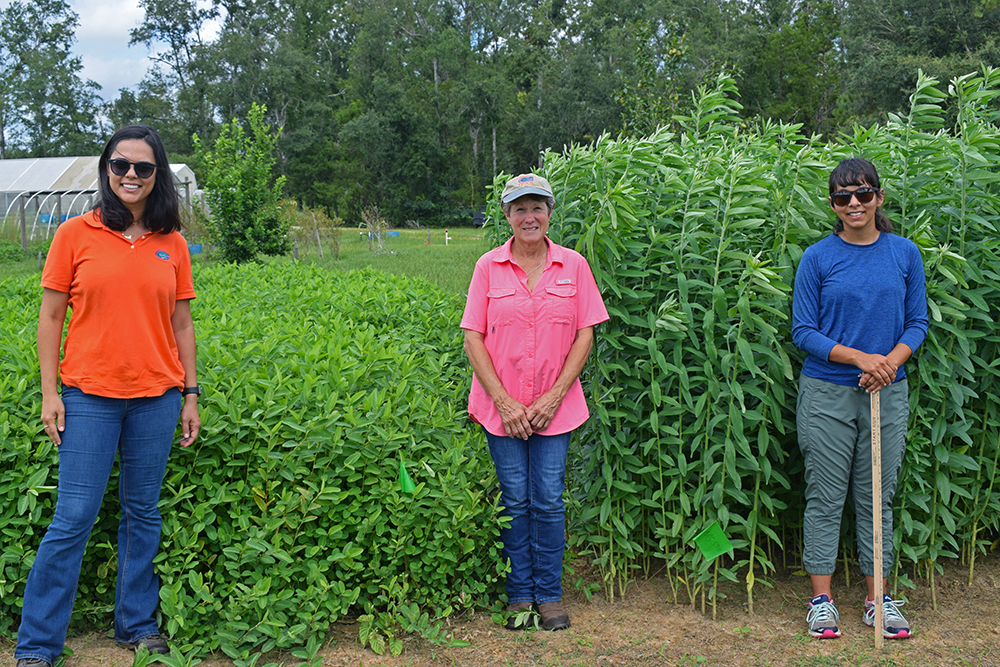 Warm-Season Annual Forage Legume Video Tour
