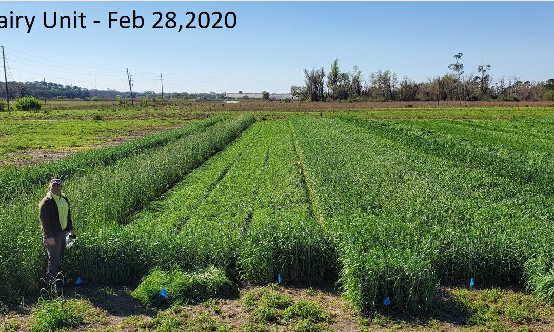 Cool-Season Forage Video Tour & 2020 Variety Recommendations