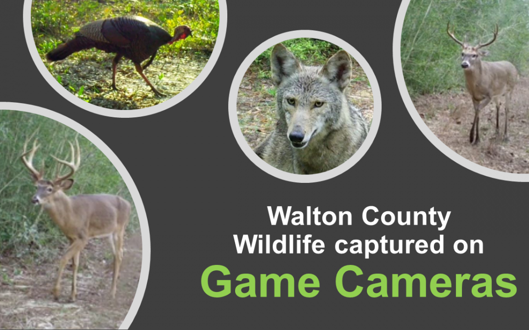 Game Cameras for Wildlife Monitoring