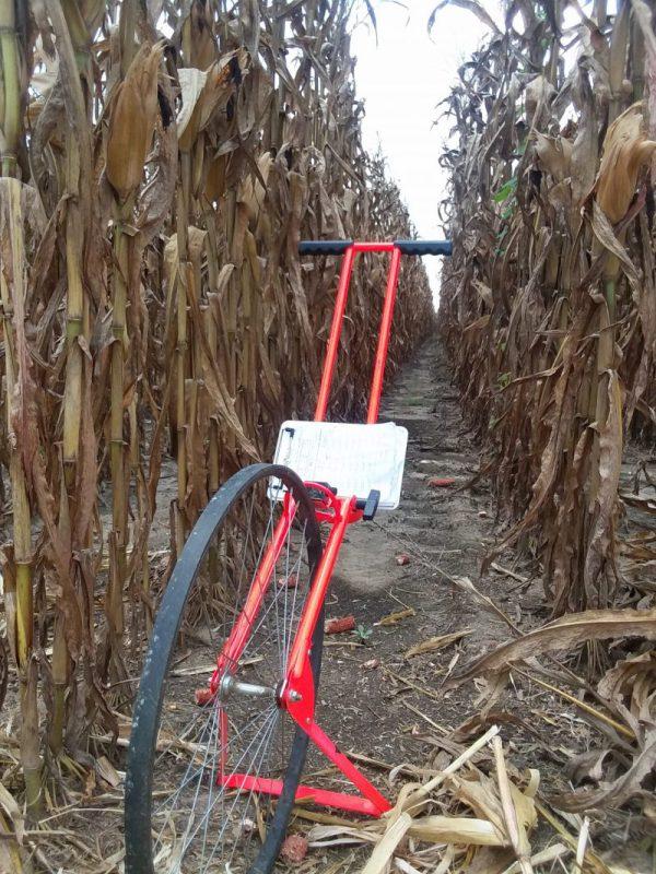 Measuring wheel in corn field
