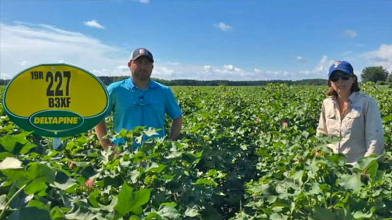Video Tour of the 2020 Deltapine NPE Trials on Marshall Farms in Okaloosa County