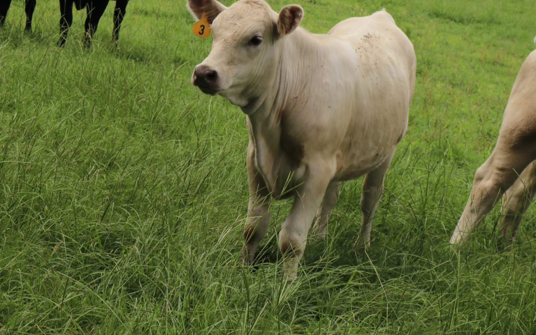 Grazing Management Options for Cool-Season Forages