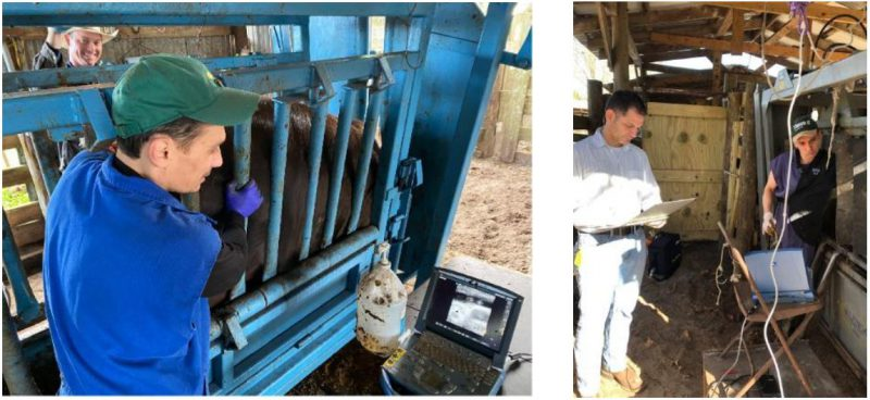 Know Your Heifer Program featured image