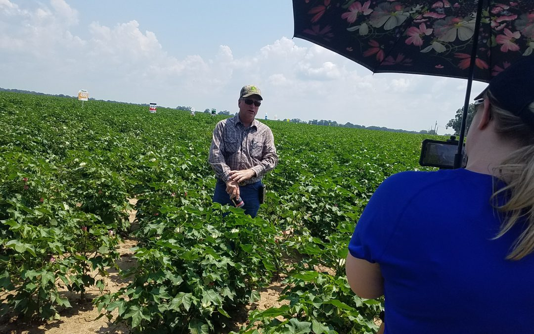 Cotton Variety Trials in Santa Rosa County