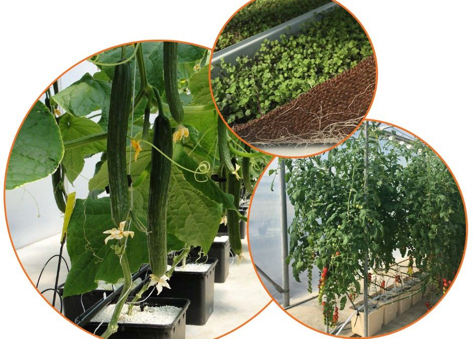 Online Hydroponic Vegetable Production Course – November 9-December 11