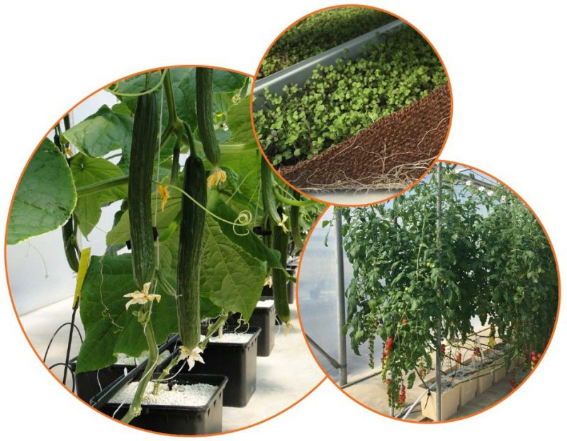 Hydroponics Course featured image