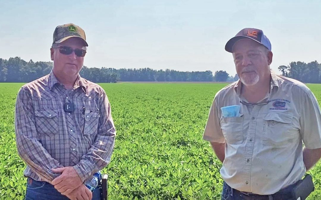 Video Tour of the 2020 Santa Rosa County Peanut Variety Trial