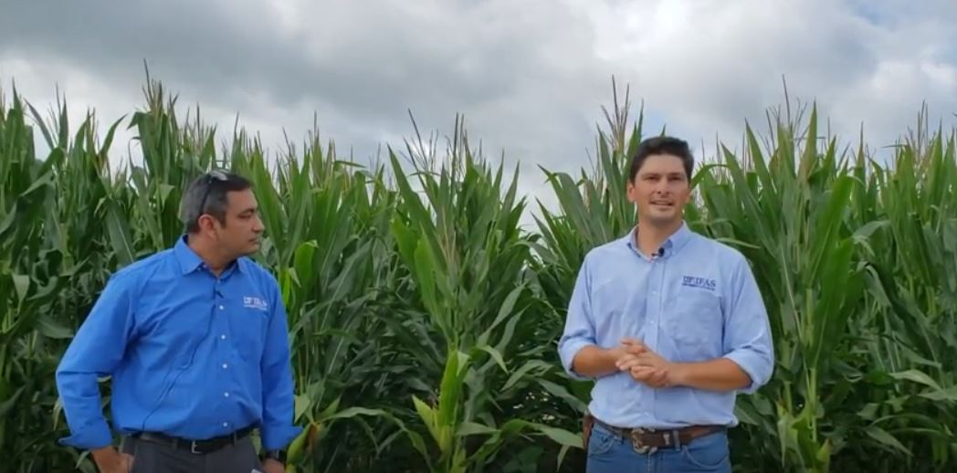 2020 UF/IFAS Spring Corn Silage Test Summary