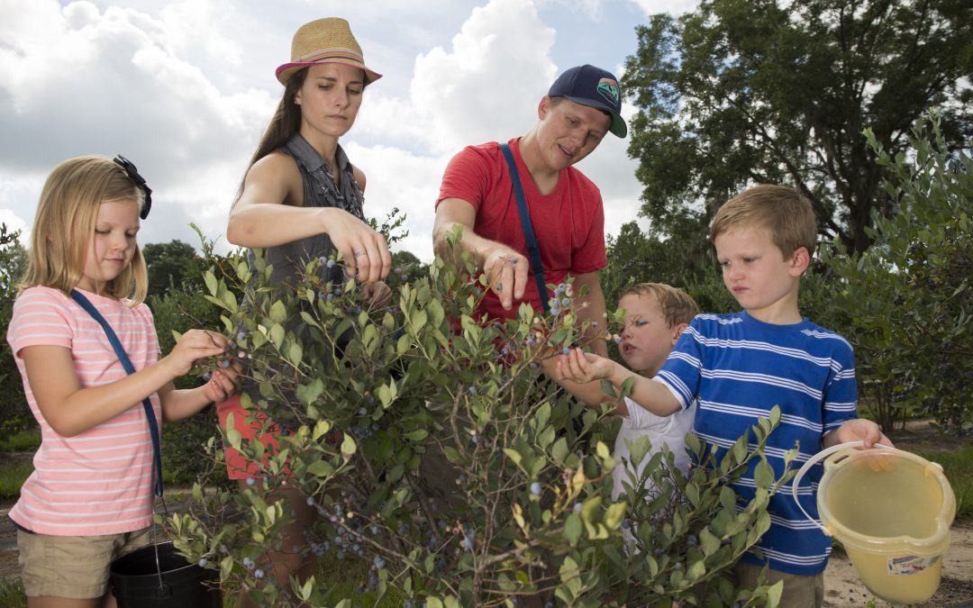Farm Stay – The Next Level of Agritourism