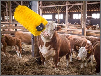 Friday Feature:  The Easy Swing Cow Brush – Spa Treatment for Your Herd