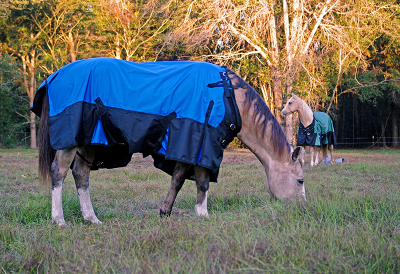 Winter Care for Florida Horses – To Blanket or Not to Blanket?