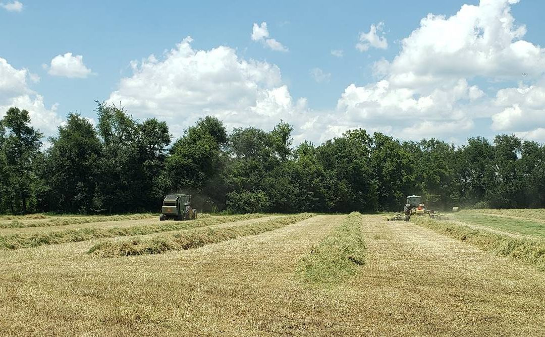 The Best of Florida from the 2020 Southeastern Hay Contest