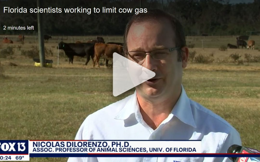 Friday Feature:  Reducing Methane from Cattle – UF/IFAS Beef Unit Research in the News
