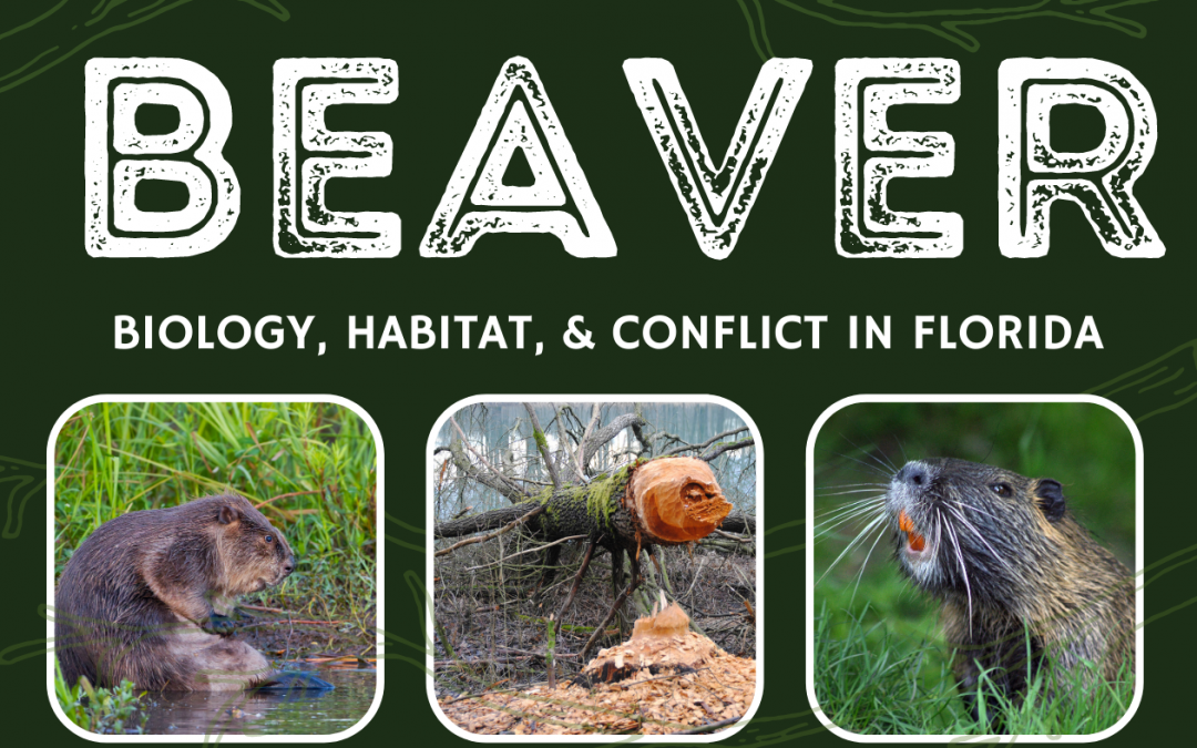Beaver Biology and Control Webinar – March 15