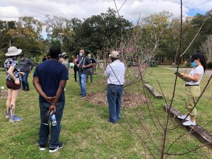 Extension agent Trevor Hylton taught training participants about pruning fruit trees at the UF/IFAS Leon County Extension Office. Photo by Molly Jameson.
