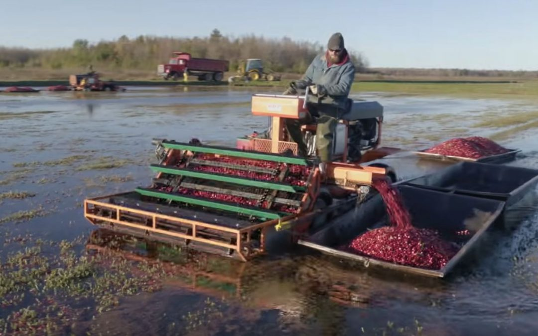 Friday Feature:  Cranberry Farming Start to Finish