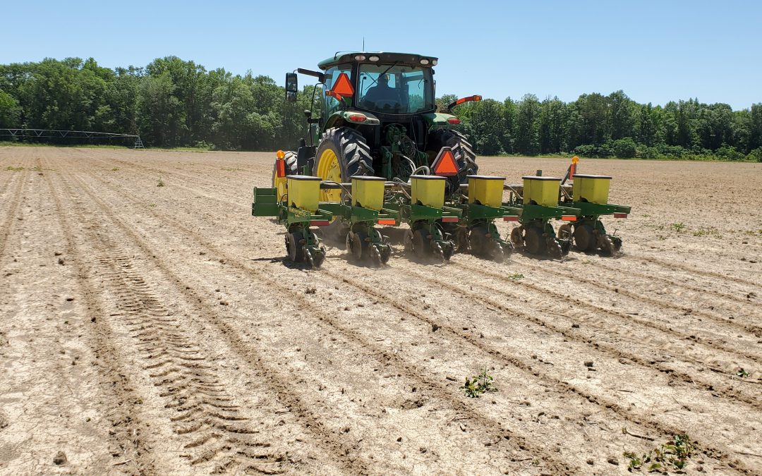 Preemergence Herbicde Treatments Behind the Cotton Planter