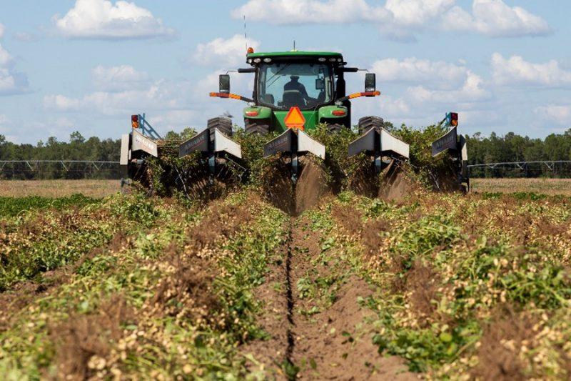 Calcium for Peanut Production in North Florida