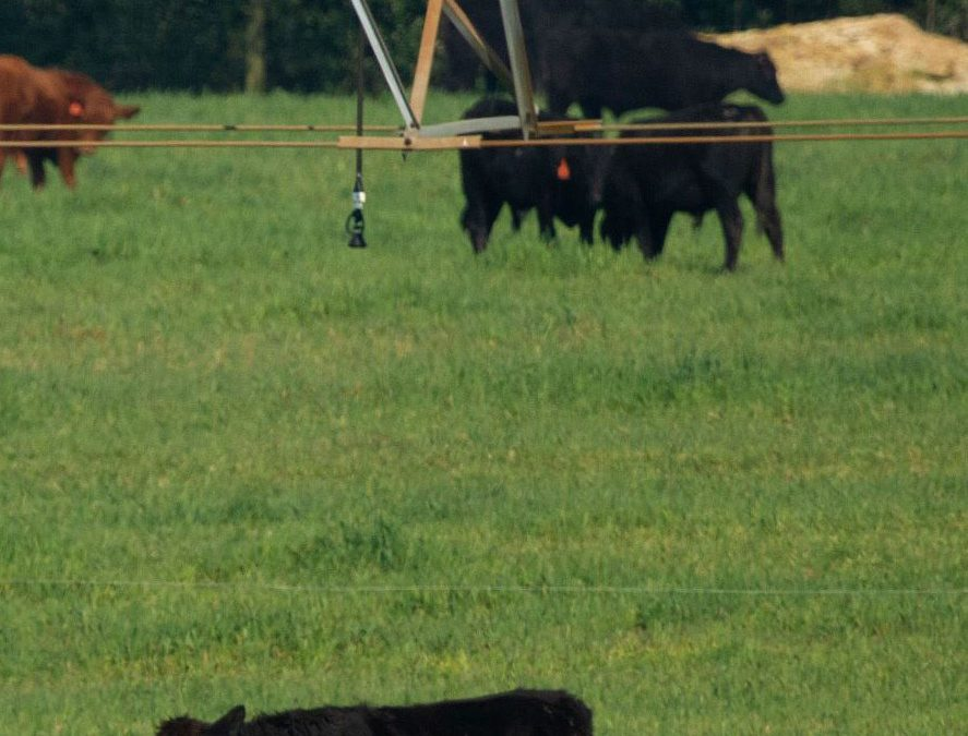 Technical and Financial Assistance Available for Producers to Implement Farm BMPs