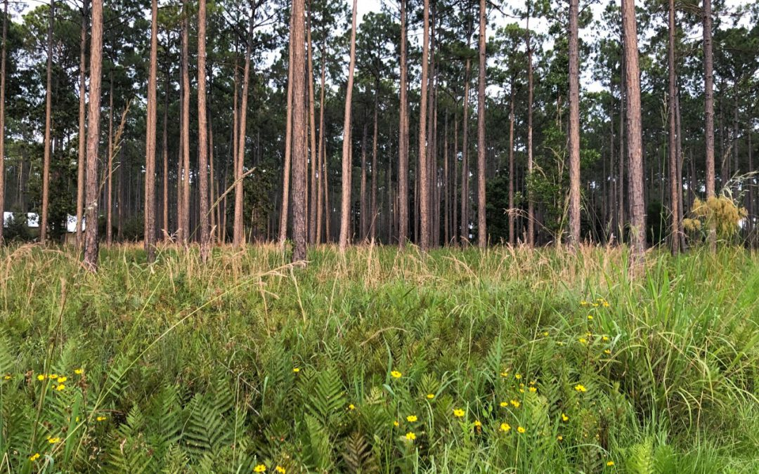 Healthy Forest and Land Management Decisions